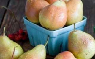 Сорта сладких груш сочных осенняя сладкая с описанием