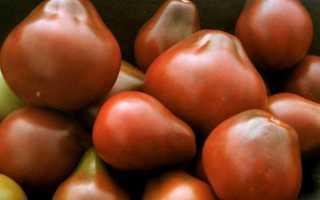 Томат груша красная черная медовая розовая оранжевая описание сортов отзывы