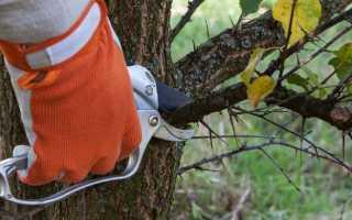 Осенняя обрезка деревьев в саду