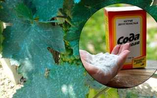 Обработка винограда пищевой содой и йодом как опрыскать