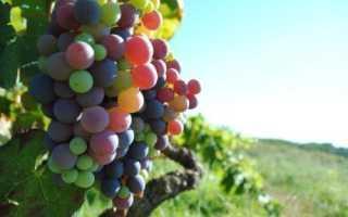 Применение листовой подкормки винограда