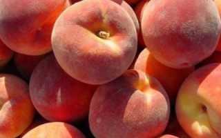 Причины горечи персика