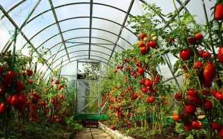Агротехника выращивания томатов в теплице в подмосковье