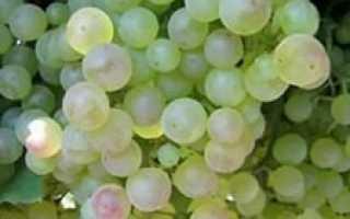 Характеристика сортов винограда сидлис американской селекции