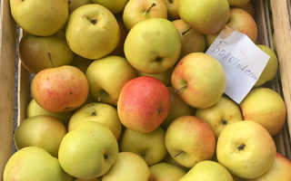 Сортовое описание яблони болотовское