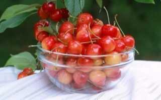 Особенности выращивания черешни красная горка