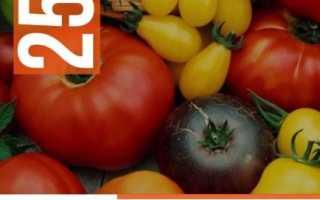 Томат морковный описание сорта фото отзывы