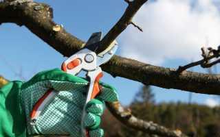 Время обрезки плодовых деревьев осенью