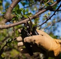 Зачем за деревом ухаживать весной