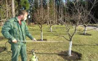 Чем обработать фруктовые деревья осенью
