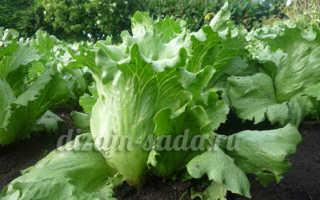 Салат семена лучшие сорта отзывы