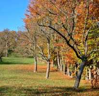Уход за яблонями осенью борьба с вредителями