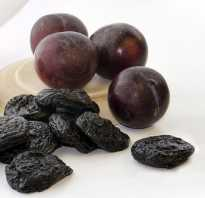 Из какого сорта сливы делают чернослив