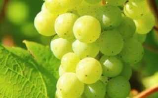 Уход за виноградом в первый год посадки