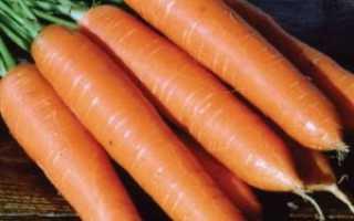 Морковь роте ризен отзывы описание сорта