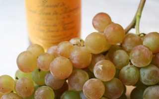 Выращивание мускатного винограда летний