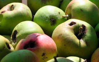 Плодожорка на яблоне методы борьбы