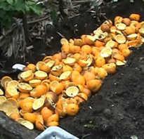 Апельсиновые корки как удобрение на огороде