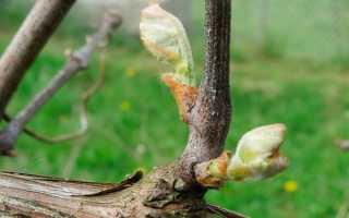 Уход за виноградом в период цветения