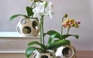Как правильно поливать орхидею фаленопсис видео