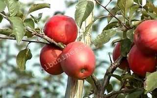 Сколько яблонь можно посадить на 1 га