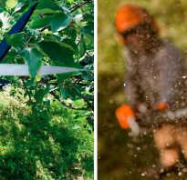 Высоторез для обрезки деревьев