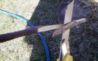 Прививка плодовых деревьев весной важная составляющая ухода