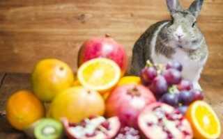 Какие овощи фрукты можно кроликам