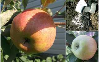 Описание и характеристики яблони медуница