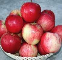 Выращивание яблони строевское