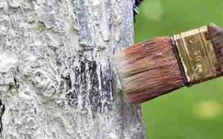 Побелка яблонь осенью состав