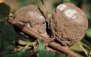 Яблоки гниют на яблоне советы специалистов