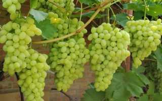 Когда пересаживать виноград весной или осенью