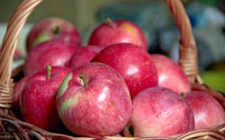 Обзор сорта яблок слава победителю его преимущества и недостатки