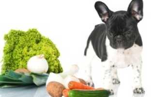 Можно ли давать морковь собакам курам и другим животным