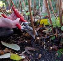 Когда обрезать малину осенью или весной