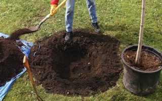Кислотность почвы для яблони