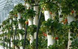 Вертикальные грядки для огурцов клубники фасоли