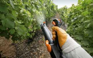 Обработка винограда медным купоросом