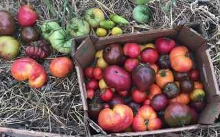 Итальянские сорта томатов