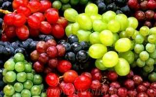 Выращивание разных сортов белого винограда