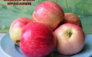 Описание и характеристики яблони сорта башкирская красавица преимущества и недостатки