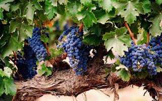 Удобрение винограда навозом