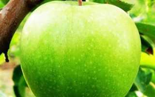 Яблоня гренни смит выращивание в россии