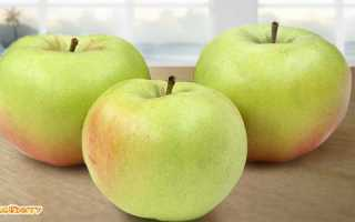 Яблоня богатырь описание сорта
