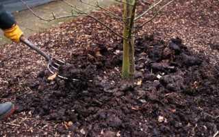 Уход за деревьями осенью опрыскивание