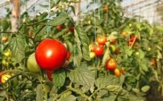 Болезни томатов в теплице описание