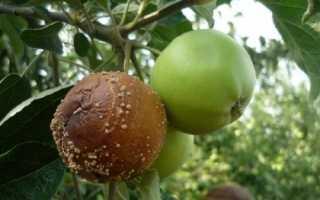Монилиоз яблони лечение и профилактика заболевания