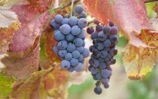 Что может сказать изменение в цвете листьев винограда