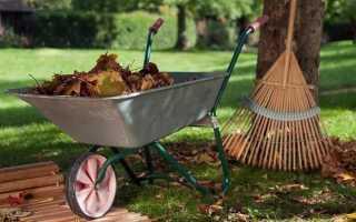 Уход за садовыми деревьями осенью